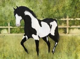 """Paint Horse. Watercolour. 16"""" x 20"""""""