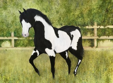 "Paint Horse. Watercolour. 16"" x 20"""