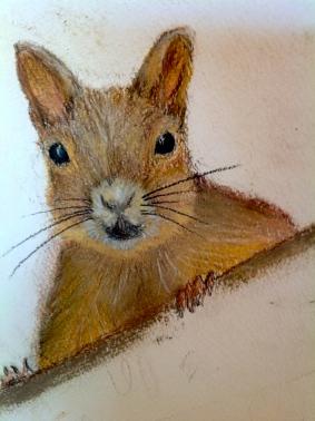 "Squirrel. Sketchbook. Pastel. 11"" x 14"""