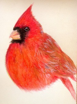 "Fat Red Cardinal. Watercolour & Pastel. 5"" x 7"""