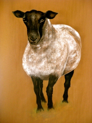"""Sheep. Pastel. 24"""" x 36"""""""