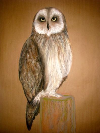"""Owl. Pastel. 16"""" x 24"""""""