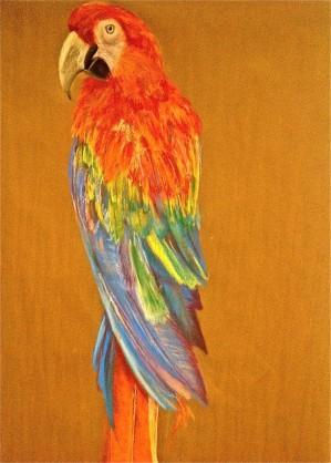 """Parrot. Pastel. 12"""" x 24"""""""
