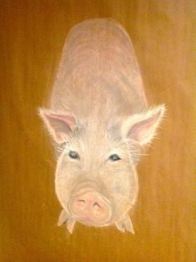 "Pig. Pastel. 20"" x 34"""