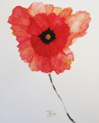 "Poppy. Watercolor. 11"" x 14"""