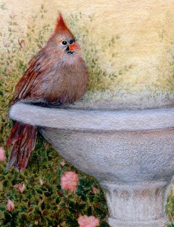 Mrs. Cardinal. Watercolor & Pastel. 8 x 10