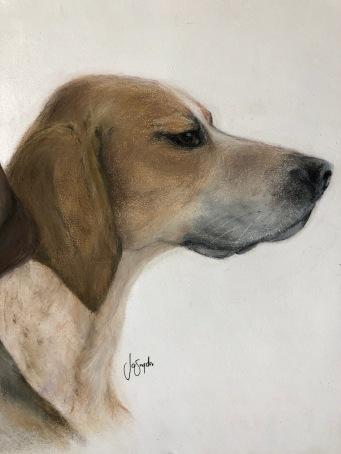 English Foxhound. Pastel