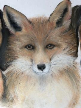 Fox. Pastel on Paper